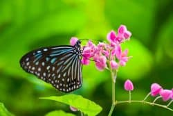 Close up of colourful butterfly resting on pink flower