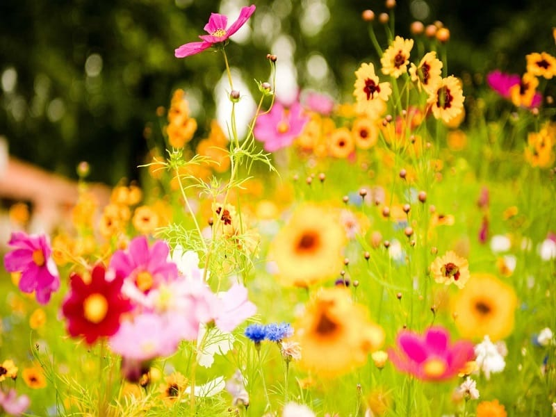Vibrant wild flowers in field
