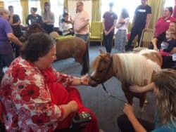 Miniature ponies visiting Revitalise Sandpipers