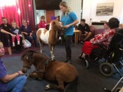 Miniature ponies visitng Revitalise Sandpipers